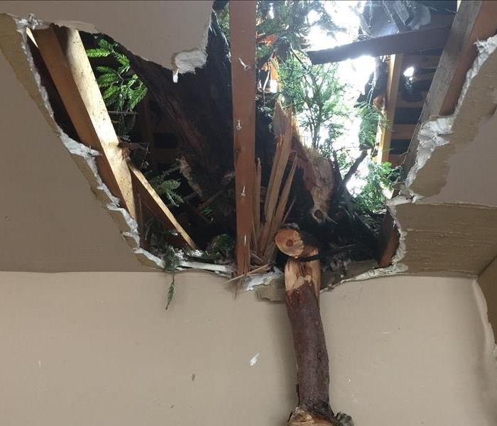 Tree Falls Through Roof