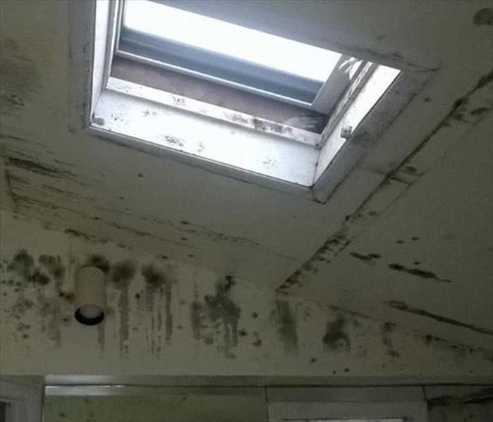Mold Infestation in Citrus Heights
