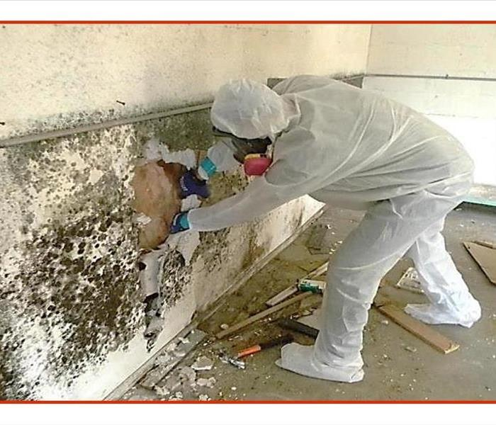 Mold Remediation Mold Remediation Steps
