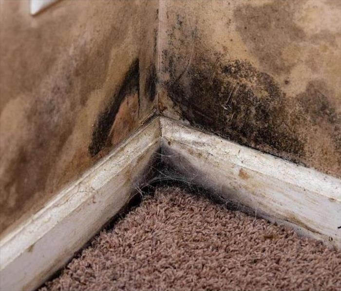 Mold Remediation Being Safe with Mold in Roseville