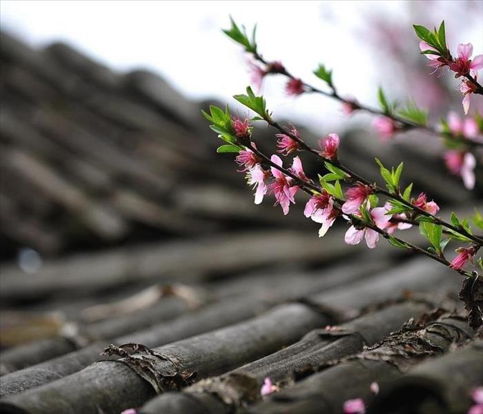 Cherry blossom branch on a rooftop